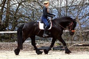 Damen Dunkel Marineblau /'Pferde lassen Herumgaloppieren auf ihrem herz/' Reiten